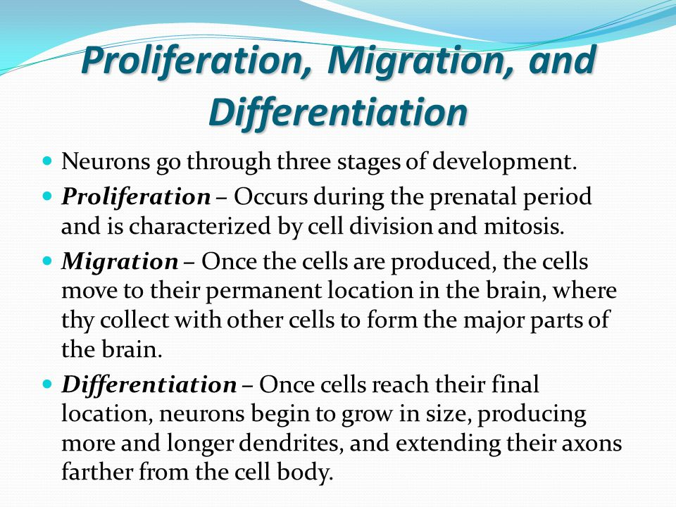 Synaptogenesis and Apoptosis Synaptogenesis – Is the process of synapse formation.