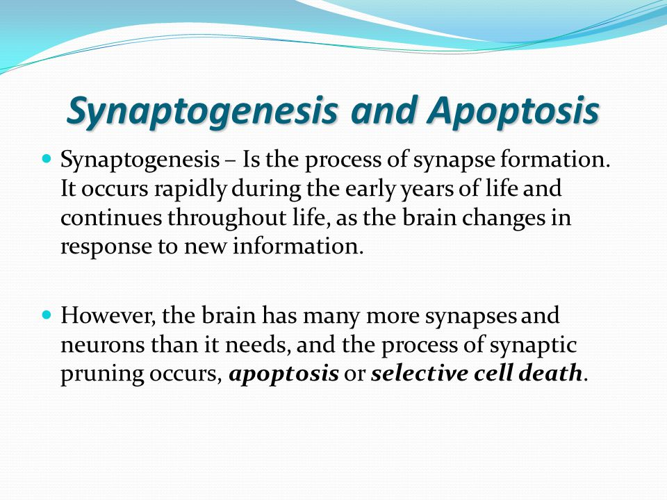 Myelination Myelin – a fatty substance that surrounds the axons of neurons and promotes faster transmission of electrical signals.