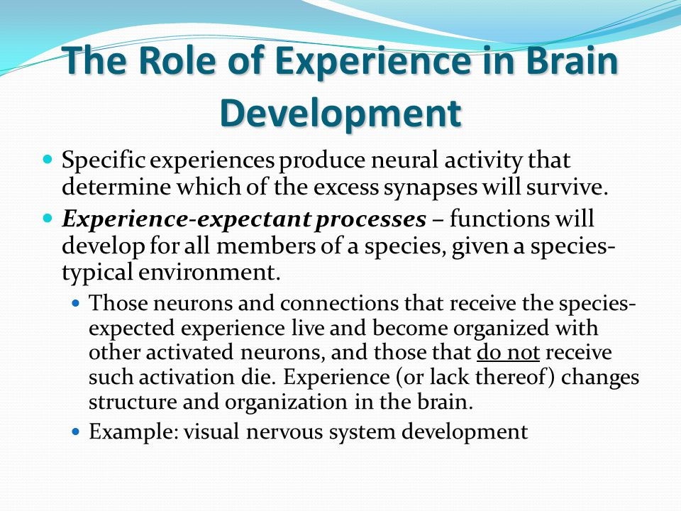 The Role of Experience in Brain Development Experience-dependent processes – connections are made due to the unique experiences that an individual has.