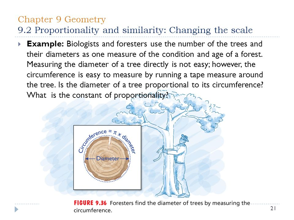 Chapter 9 Geometry 9.2 Proportionality and similarity: Changing the scale 21  Example: Biologists and foresters use the number of the trees and their diameters as one measure of the condition and age of a forest.
