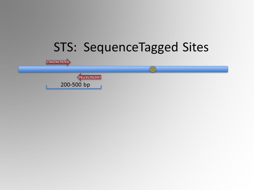CTAGTACTGTCG CAGTGCTATTAG 200-500 bp STS: SequenceTagged Sites