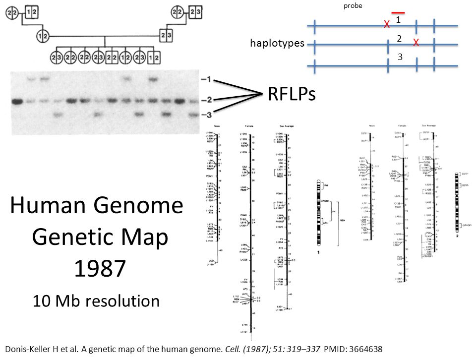 RFLPs Donis-Keller H et al. A genetic map of the human genome.