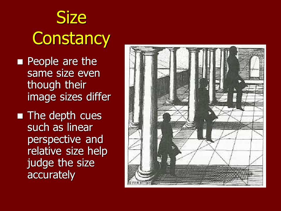 Size Constancy People are the same size even though their image sizes differ People are the same size even though their image sizes differ The depth cues such as linear perspective and relative size help judge the size accurately The depth cues such as linear perspective and relative size help judge the size accurately