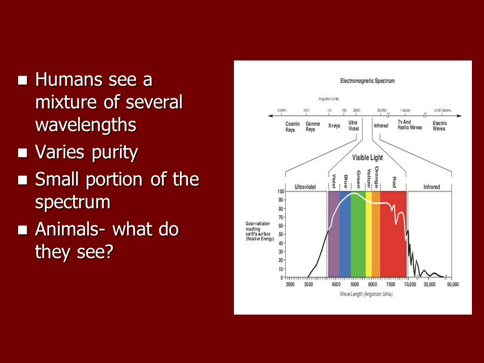 Humans see a mixture of several wavelengths Humans see a mixture of several wavelengths Varies purity Varies purity Small portion of the spectrum Small portion of the spectrum Animals- what do they see.