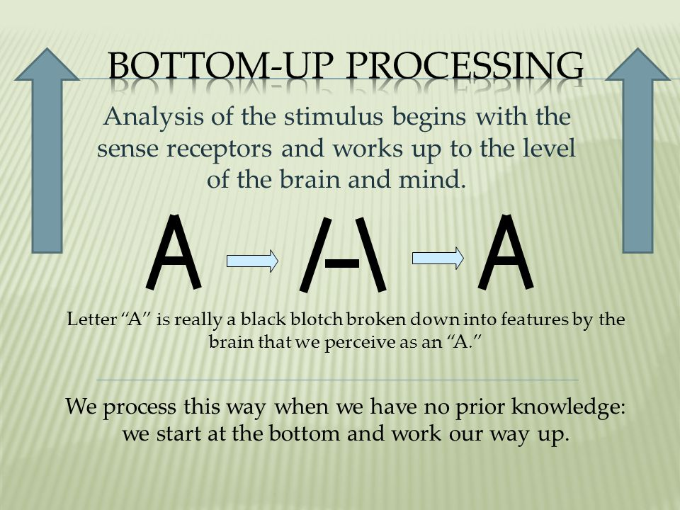 Analysis of the stimulus begins with the sense receptors and works up to the level of the brain and mind.