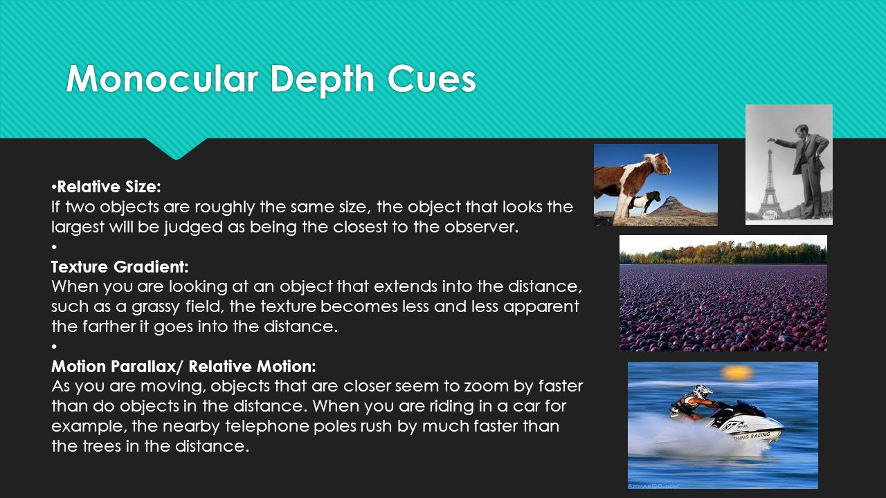 Monocular Depth Cues Relative Size: If two objects are roughly the same size, the object that looks the largest will be judged as being the closest to the observer.