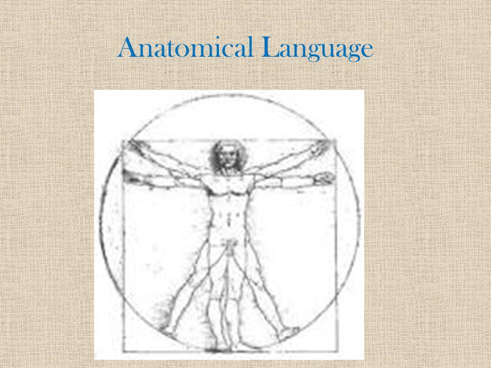 Anatomical Language