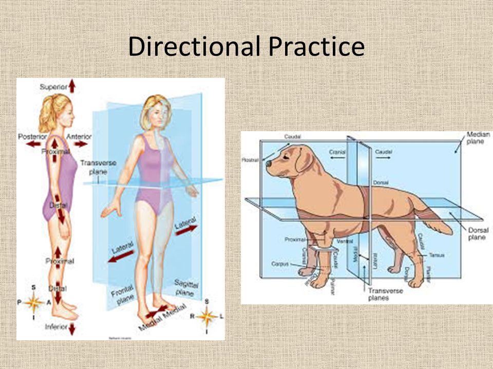 Directional Practice