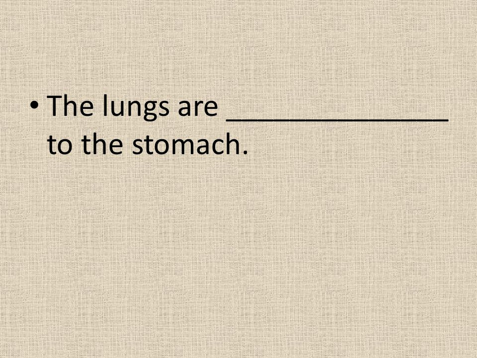 The lungs are ______________ to the stomach.