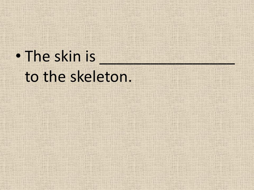 The skin is ________________ to the skeleton.