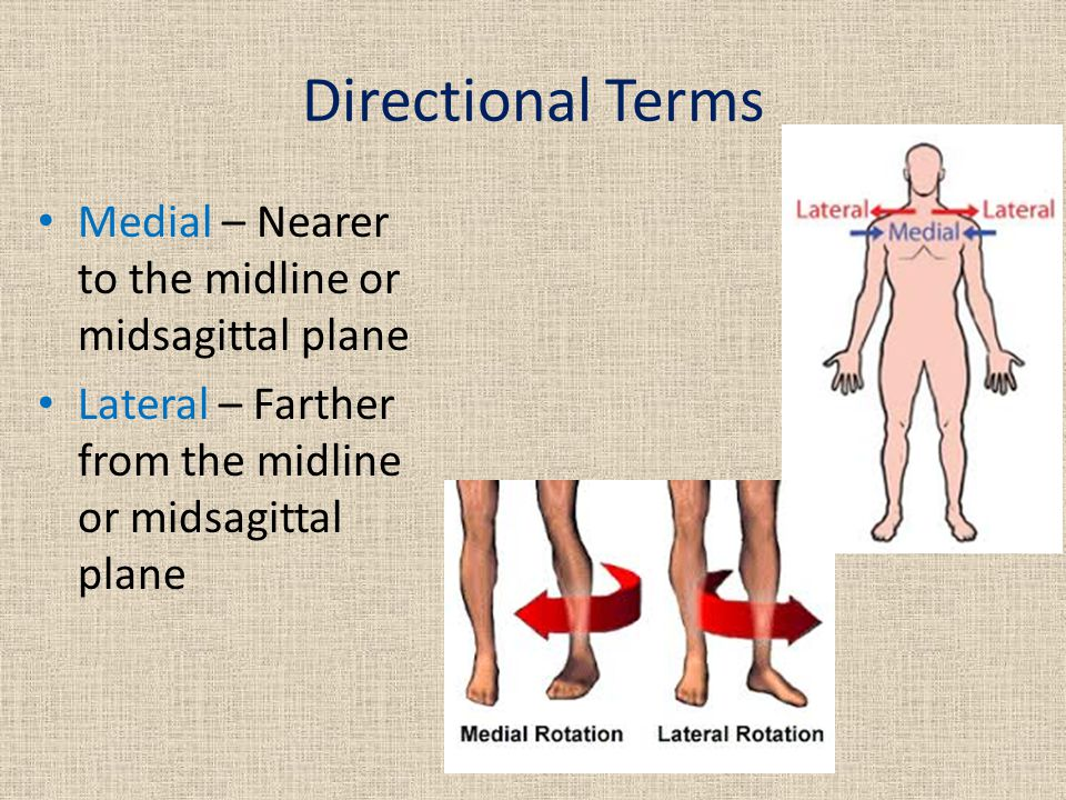 Directional Terms Medial – Nearer to the midline or midsagittal plane Lateral – Farther from the midline or midsagittal plane