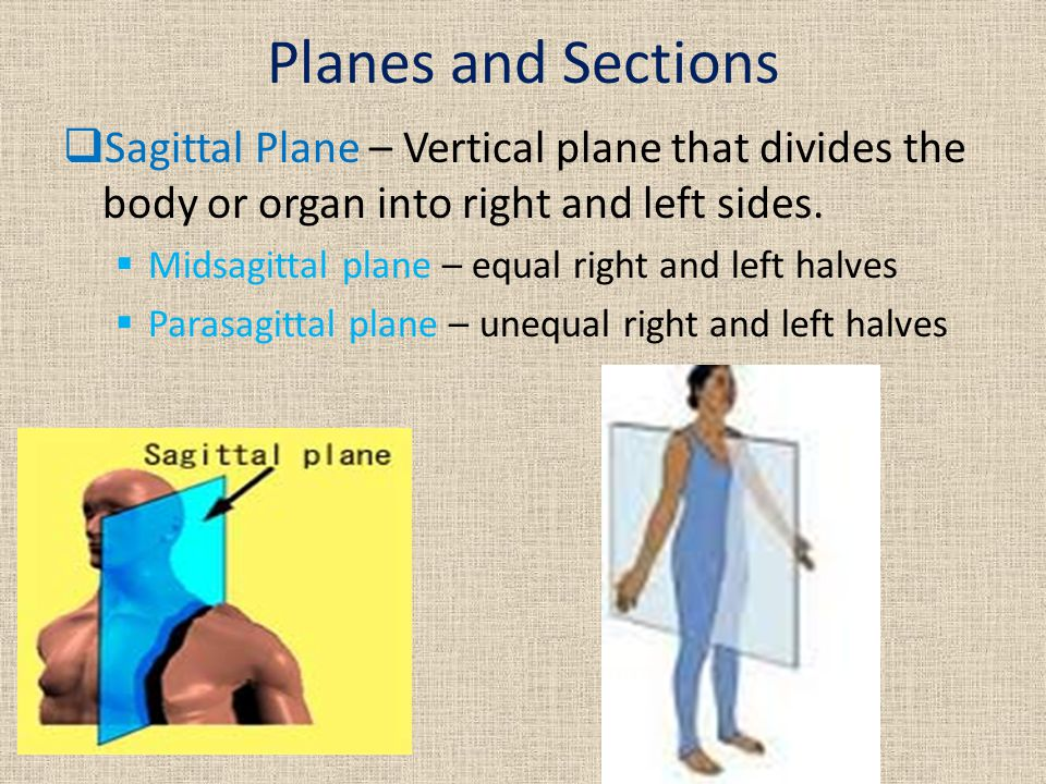 Planes and Sections  Sagittal Plane – Vertical plane that divides the body or organ into right and left sides.  Midsagittal plane – equal right and