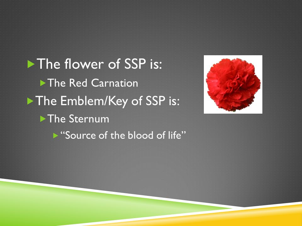  The flower of SSP is:  The Red Carnation  The Emblem/Key of SSP is:  The Sternum  Source of the blood of life