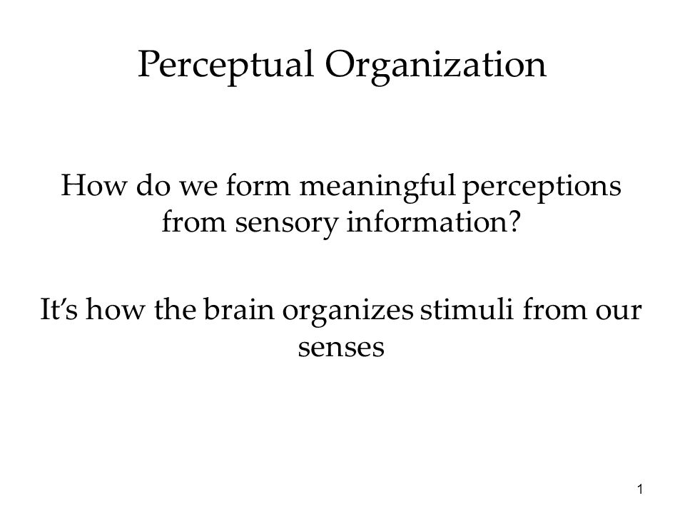 1 Perceptual Organization How do we form meaningful perceptions from sensory information? It's how the brain organizes stimuli from our senses