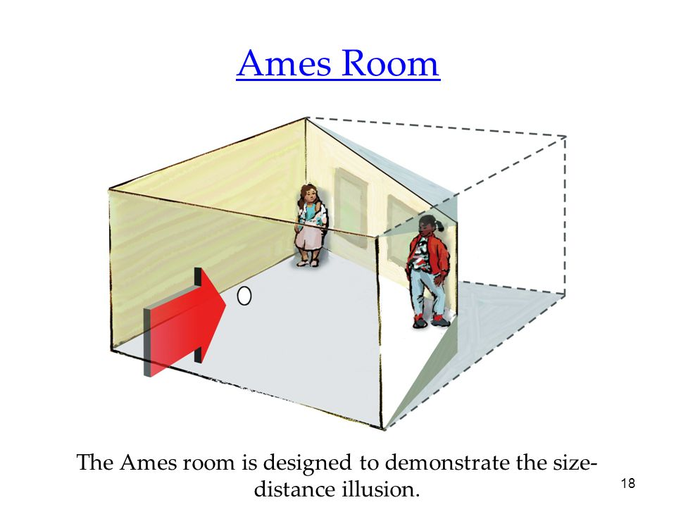 18 Ames Room The Ames room is designed to demonstrate the size- distance illusion.