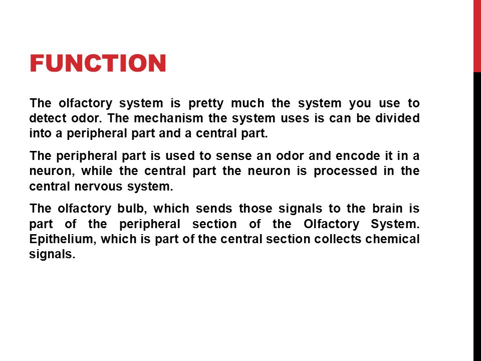 FUNCTION The olfactory system is pretty much the system you use to detect odor.