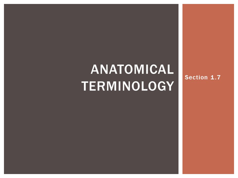 Section 1.7 ANATOMICAL TERMINOLOGY