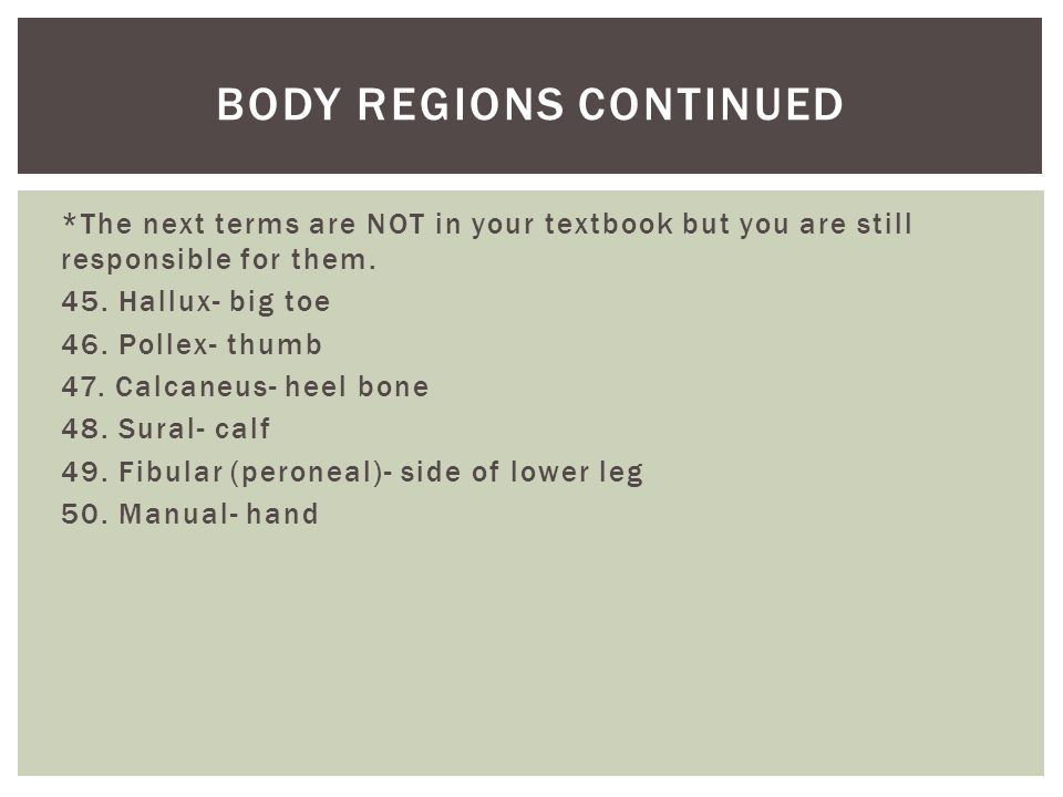 *The next terms are NOT in your textbook but you are still responsible for them. 45. Hallux- big toe 46. Pollex- thumb 47. Calcaneus- heel bone 48. Su