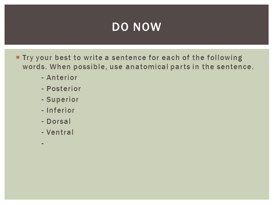  Try your best to write a sentence for each of the following words. When possible, use anatomical parts in the sentence. - Anterior - Posterior - Sup