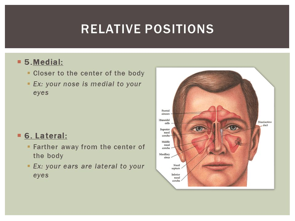  5.Medial:  Closer to the center of the body  Ex: your nose is medial to your eyes  6. Lateral:  Farther away from the center of the body  Ex: y