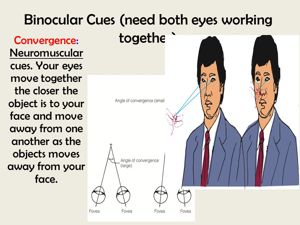 Binocular Cues (need both eyes working together) Convergence: Neuromuscular cues. Your eyes move together the closer the object is to your face and mo
