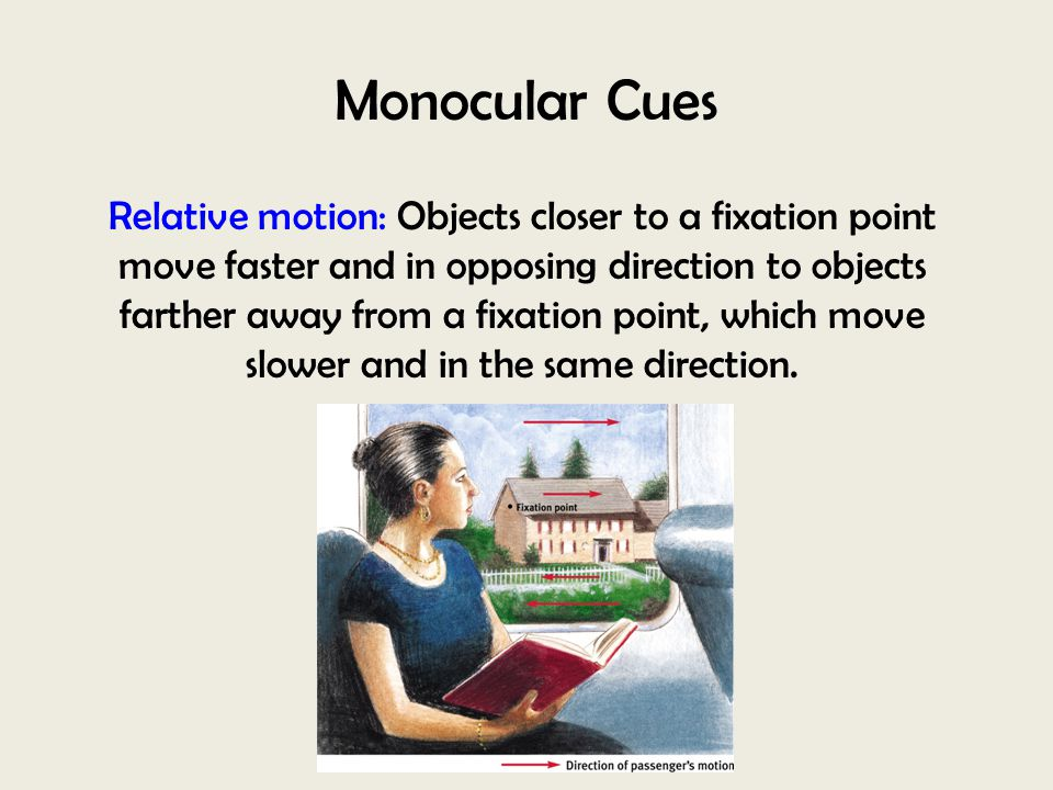 Monocular Cues Relative motion: Objects closer to a fixation point move faster and in opposing direction to objects farther away from a fixation point