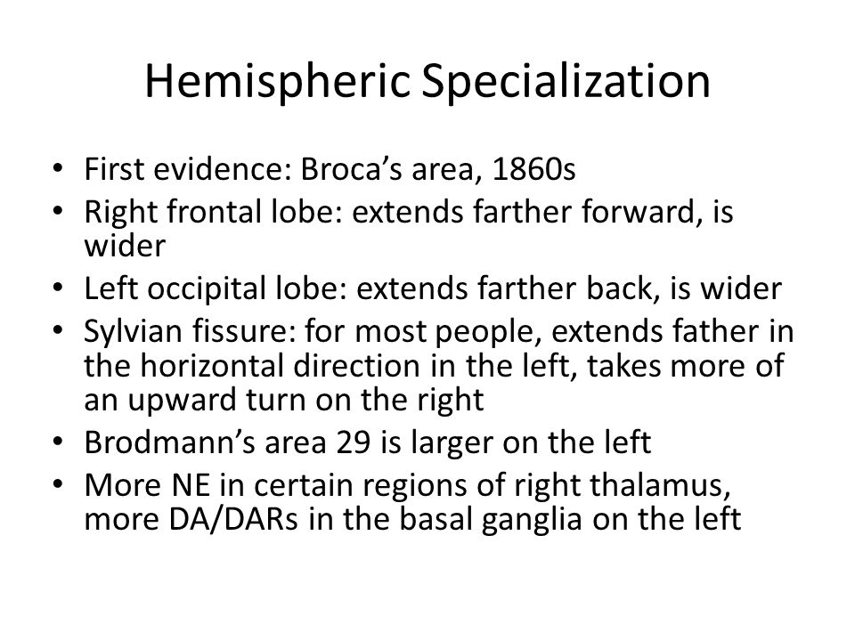 Hemispheric Specialization First evidence: Broca's area, 1860s Right frontal lobe: extends farther forward, is wider Left occipital lobe: extends farther back, is wider Sylvian fissure: for most people, extends father in the horizontal direction in the left, takes more of an upward turn on the right Brodmann's area 29 is larger on the left More NE in certain regions of right thalamus, more DA/DARs in the basal ganglia on the left