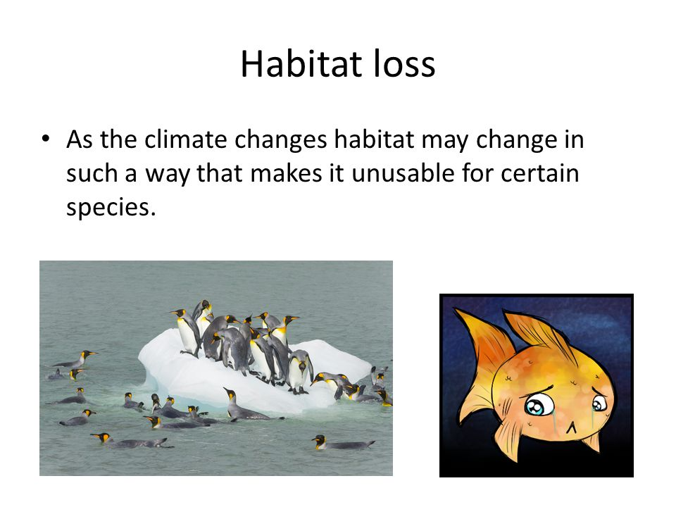 Habitat loss As the climate changes habitat may change in such a way that makes it unusable for certain species.