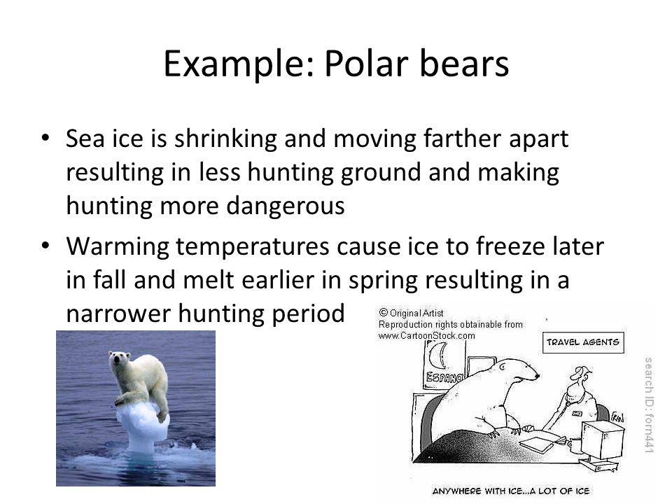 Example: Polar bears Sea ice is shrinking and moving farther apart resulting in less hunting ground and making hunting more dangerous Warming temperatures cause ice to freeze later in fall and melt earlier in spring resulting in a narrower hunting period