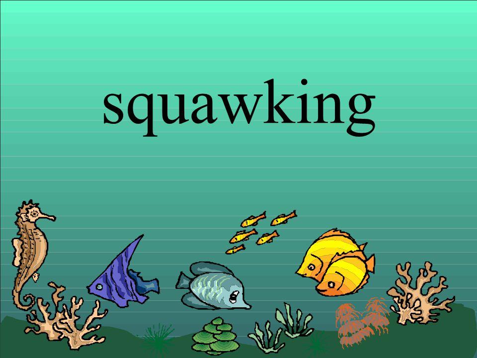 squawking