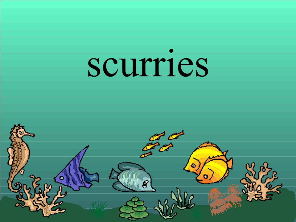 scurries