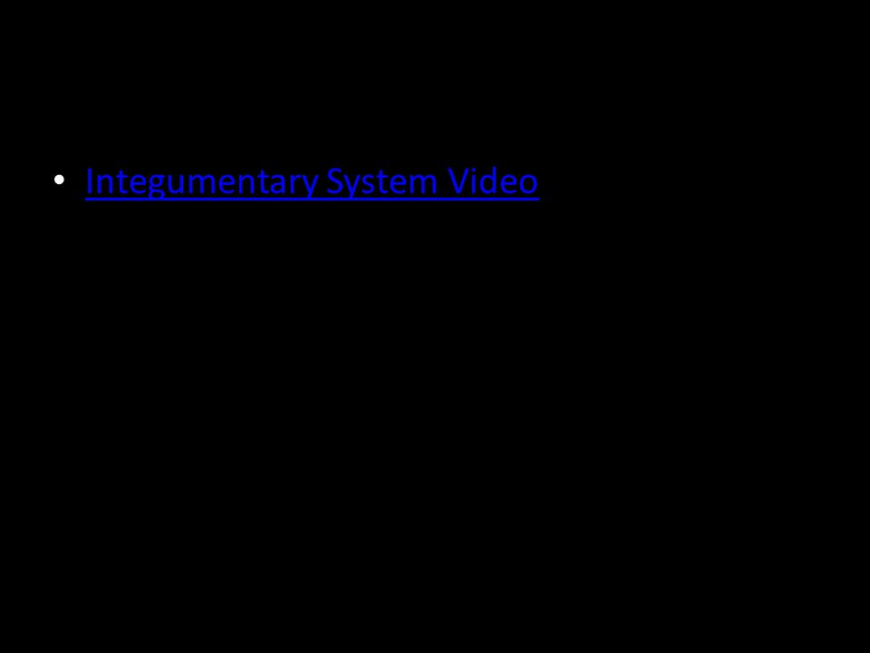 Integumentary System Video
