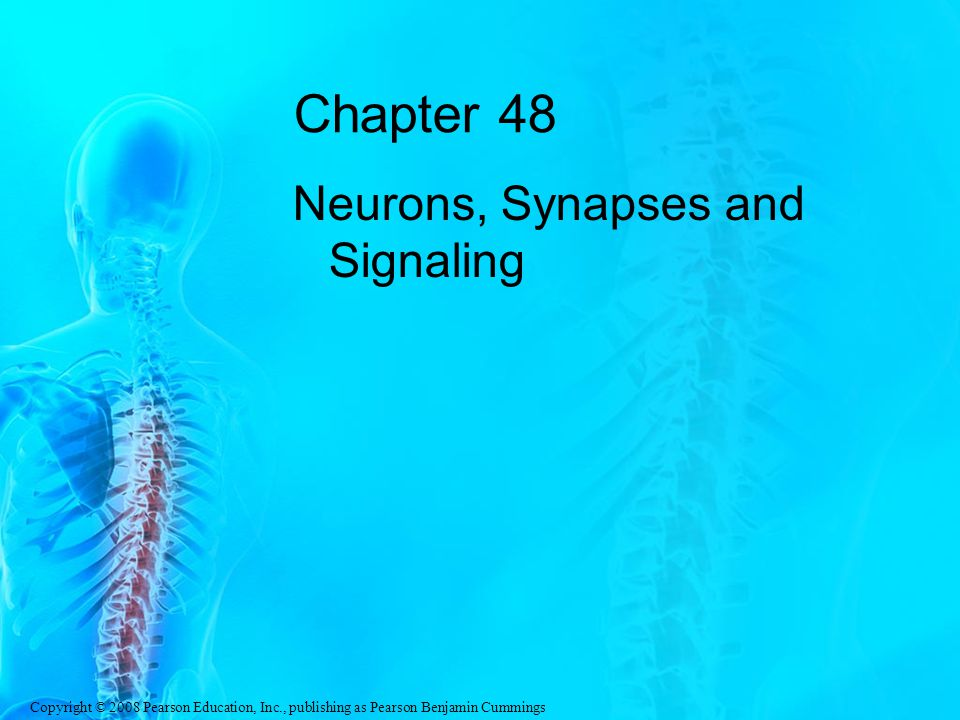 Copyright © 2008 Pearson Education, Inc., publishing as Pearson Benjamin Cummings Chapter 48 Neurons, Synapses and Signaling