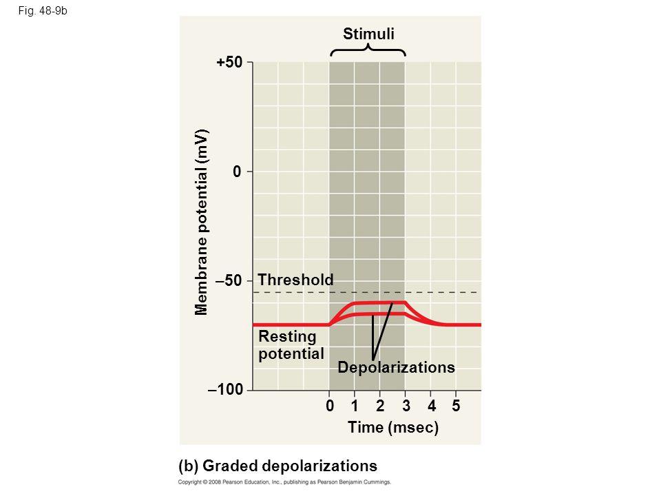 Fig. 48-9b Stimuli +50 Membrane potential (mV) –50 Threshold Resting potential Depolarizations –100 0 234 Time (msec) (b) Graded depolarizations 15 0