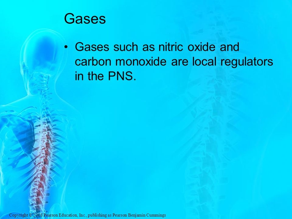 Copyright © 2008 Pearson Education, Inc., publishing as Pearson Benjamin Cummings Gases Gases such as nitric oxide and carbon monoxide are local regulators in the PNS.