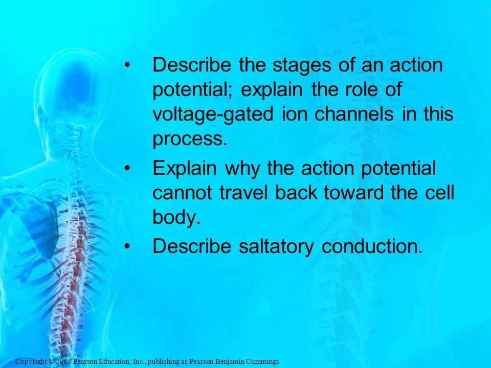 Copyright © 2008 Pearson Education, Inc., publishing as Pearson Benjamin Cummings Describe the stages of an action potential; explain the role of voltage-gated ion channels in this process.