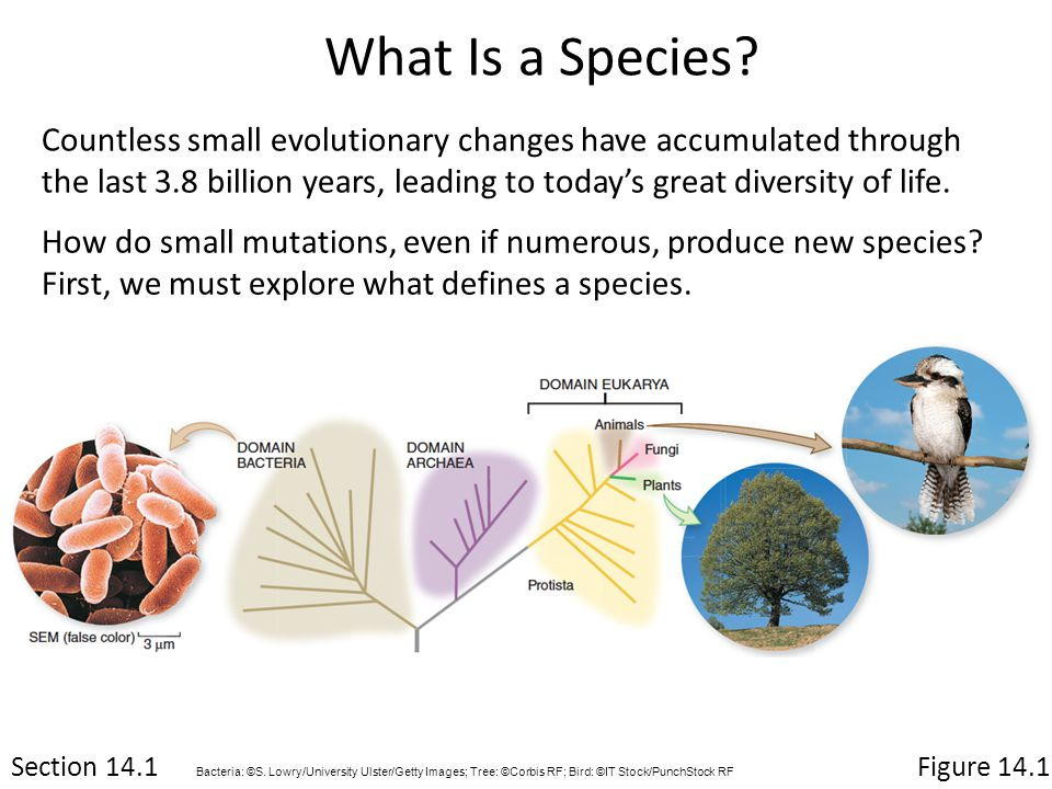 What Is a Species.