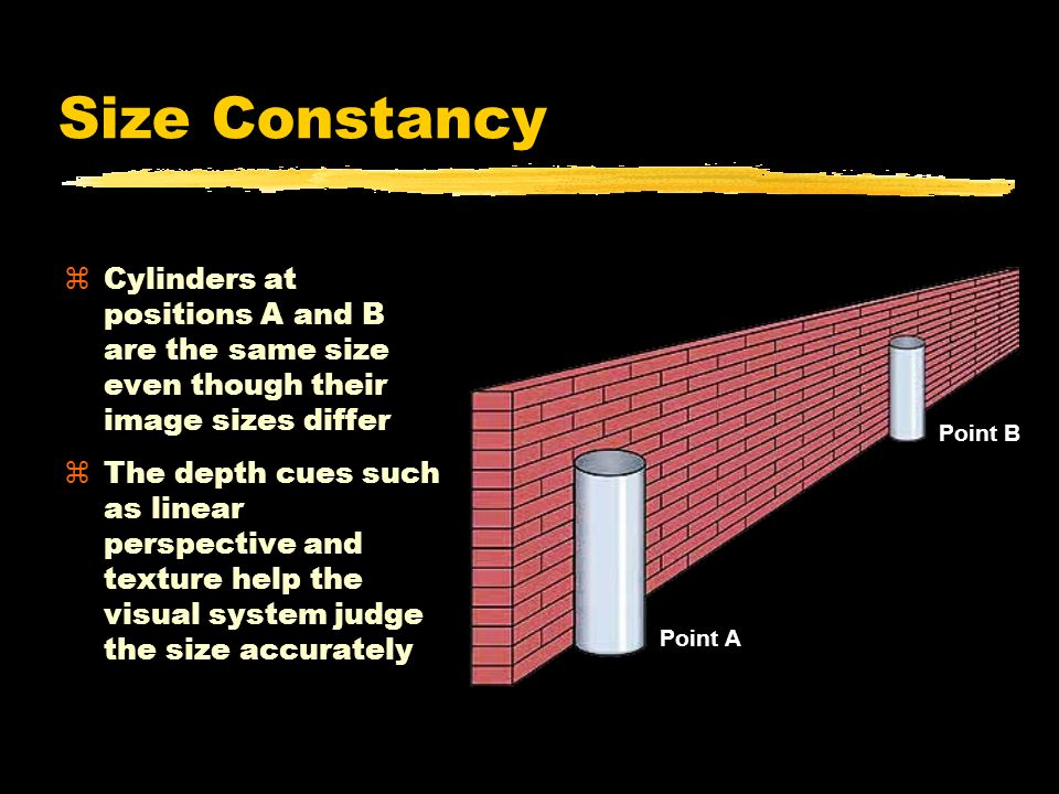 Size Constancy zCylinders at positions A and B are the same size even though their image sizes differ zThe depth cues such as linear perspective and texture help the visual system judge the size accurately Point A Point B