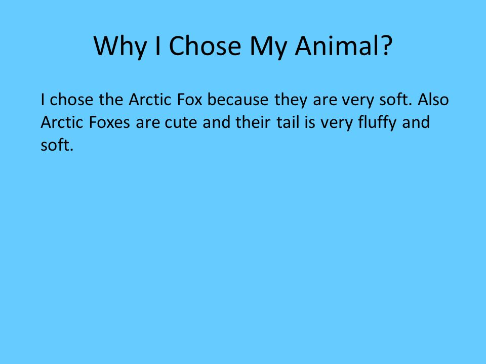 Appearance Arctic foxes have awesome characteristics.
