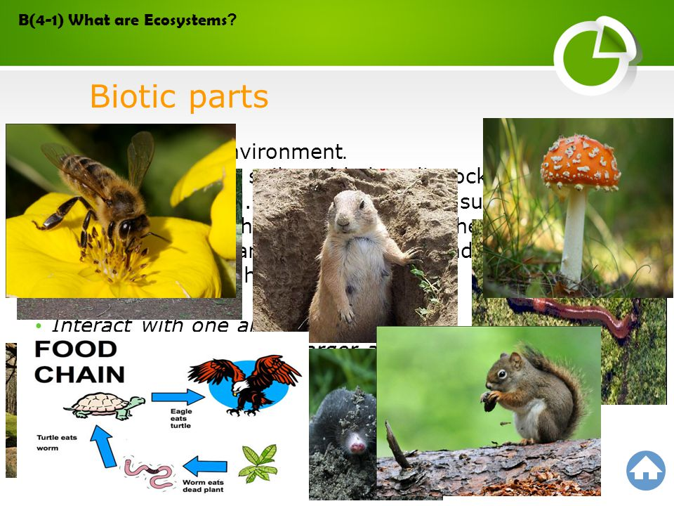 A population is a group of organisms of the same species in an ecosystem.