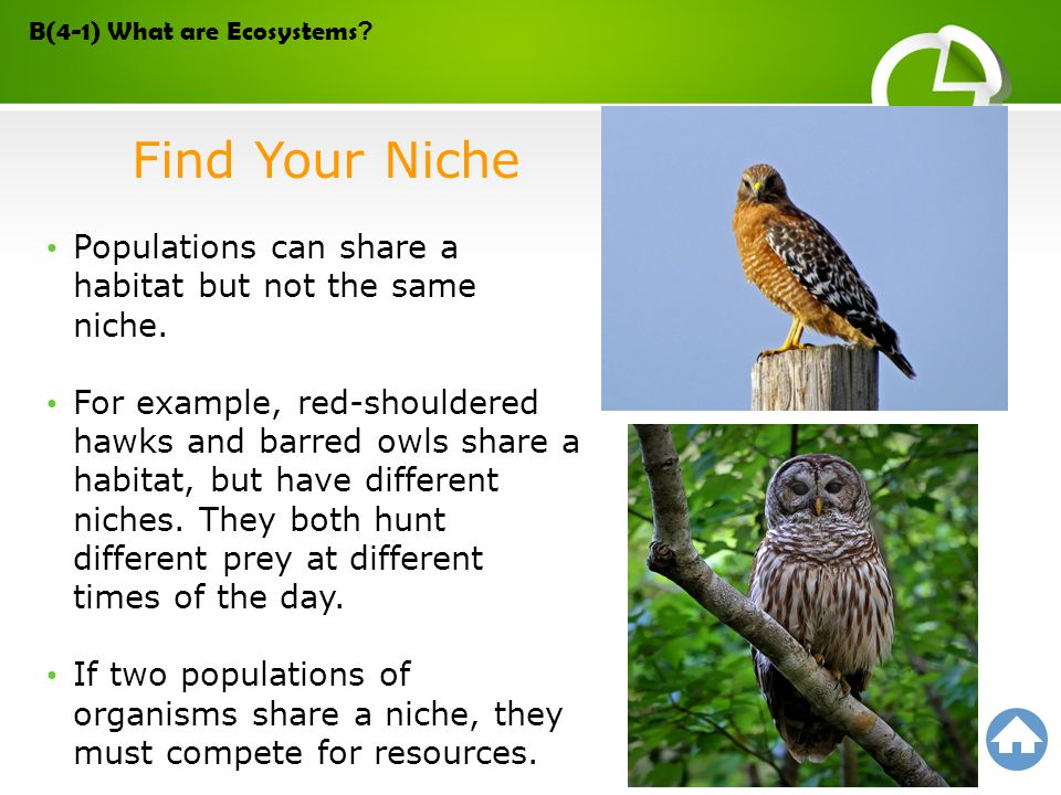 Populations can share a habitat but not the same niche. For example, red-shouldered hawks and barred owls share a habitat, but have different niches.