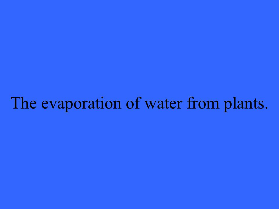 The evaporation of water from plants.