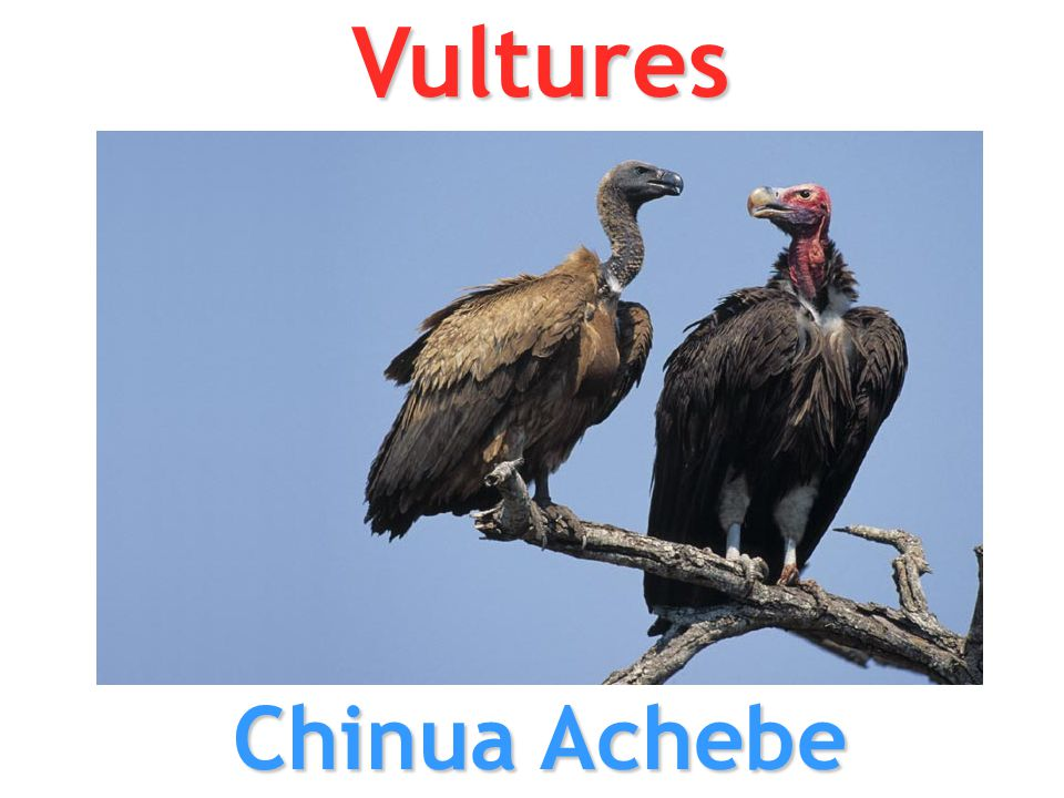 Vultures Chinua Achebe