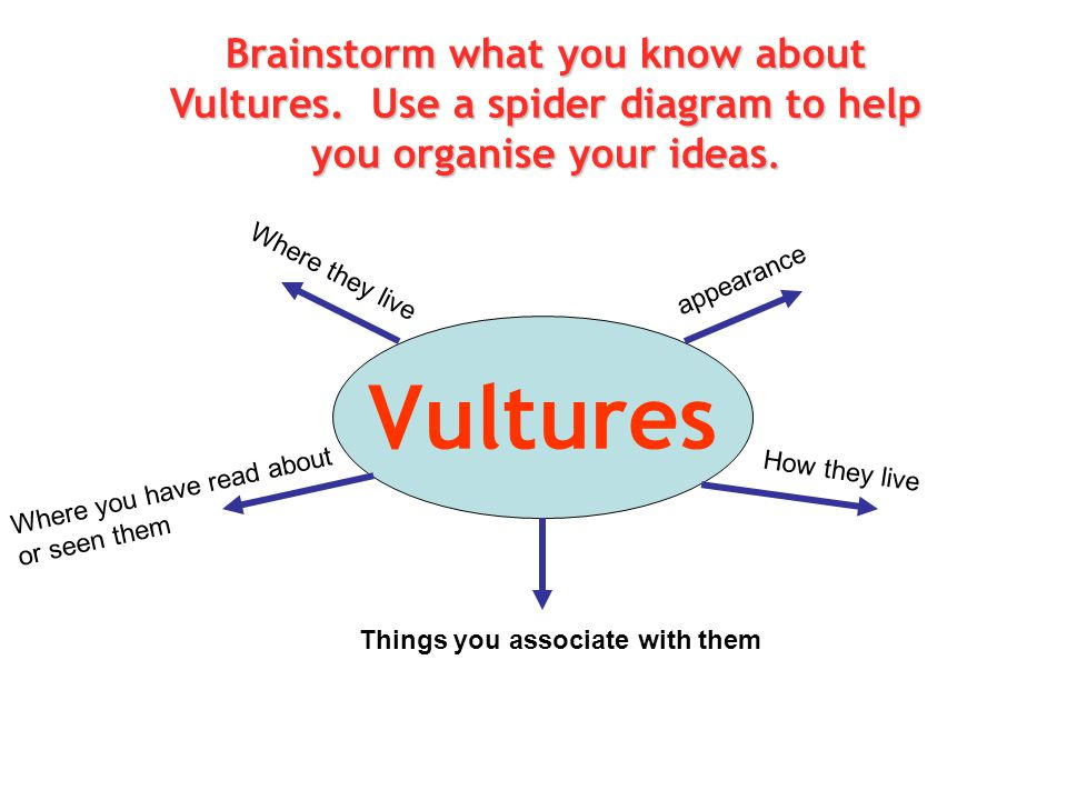 Vultures Brainstorm what you know about Vultures. Use a spider diagram to help you organise your ideas. appearance Where they live How they live Where