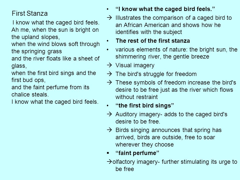 """""""I know what the caged bird feels.""""  Illustrates the comparison of a caged bird to an African American and shows how he identifies with the subject T"""