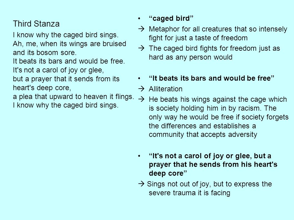 """""""caged bird""""  Metaphor for all creatures that so intensely fight for just a taste of freedom  The caged bird fights for freedom just as hard as any"""