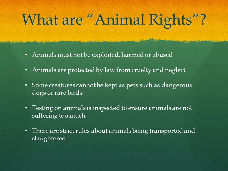 What are Animal Rights .