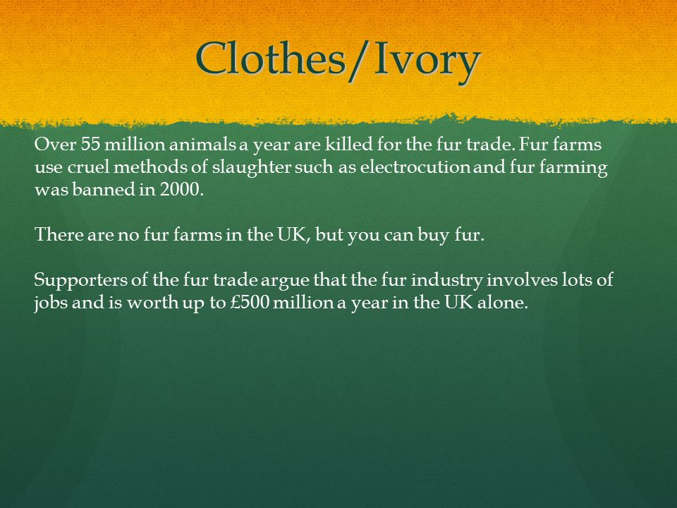 Clothes/Ivory Over 55 million animals a year are killed for the fur trade.