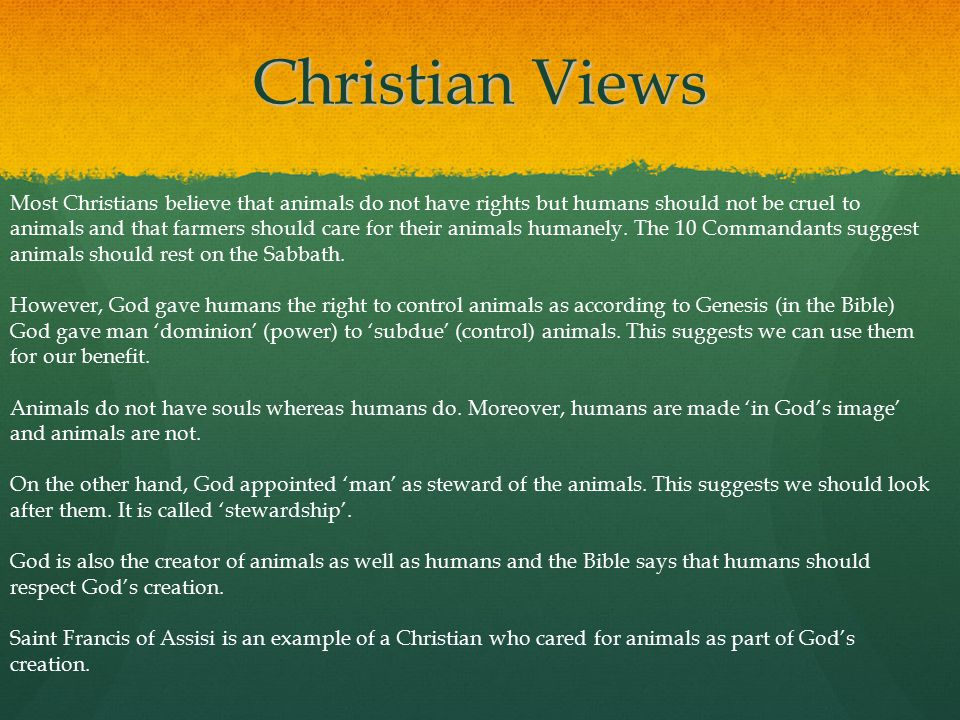 Christian Views Most Christians believe that animals do not have rights but humans should not be cruel to animals and that farmers should care for the