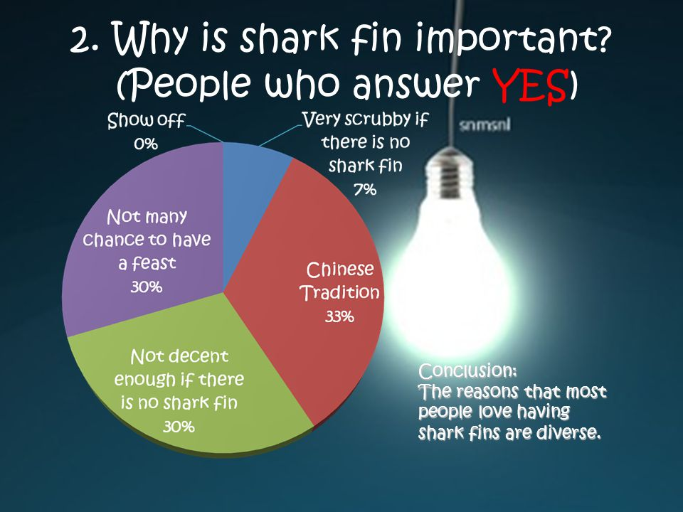 2. Why is shark fin important.